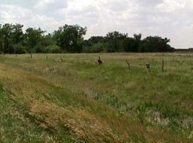 Coon Creek Crossing, Kansas