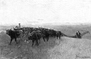 Cattle Trail