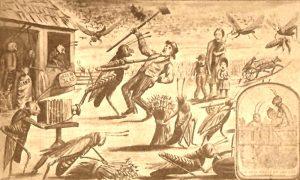 Kansas Grasshopper Plague