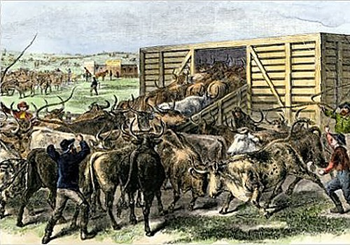 Loading cattle in Abilene, Kansas.