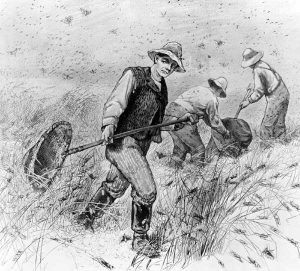 Farmers fighting the Rocky Mountain Locust.