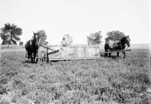 Sweeping a field crop for grasshoppers on a farm in Finney County, Kansas. Metal teeth went through the crop making the grasshoppers jump up, hit the back wall, and drop into a container by Henry L. Wolf about 1895.