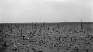 A field devastated by grasshoppers.